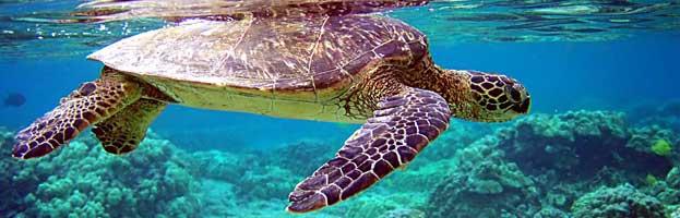 Zeeschildpad Curacao